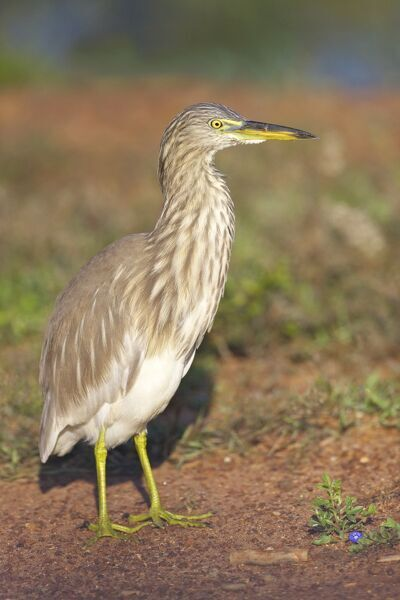 heron hindu singles Download indian girl stock photos affordable and search from millions of royalty free images, photos and vectors.