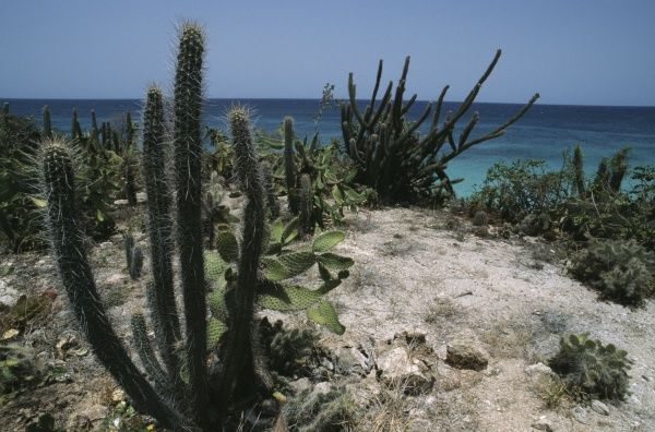 cabo rojo singles over 50 Top 5 attractions of la parguera: west divers-snorkeling tours $5000 p/p 25 to 30 minutes cabo rojo's lighthouse recently renovated and playuelas beach.