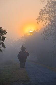 Elephant in the fog below the rising sun, Kaziranga National Park, UNESCO World Heritage