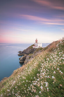Wild flowers with Baily Lighthouse in the background, Howth, County Dublin, Republic