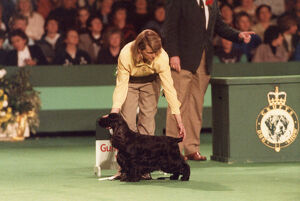 <b>Crufts 1990s</b><br>Selection of 2 items
