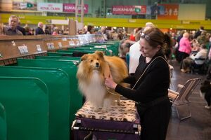 Crufts 2015 (Selection of 3804 Items)