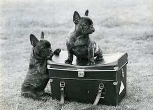 <b>Vintage Dog Photos</b><br>Selection of 6 items
