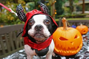 <b>All Dogs Matter Halloween</b><br>Selection of 64 items