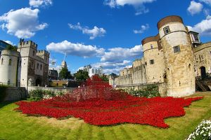 <b>Tower Poppies</b><br>Selection of 23 items