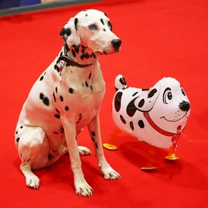 <b>National Pet Show</b><br>Selection of 35 items