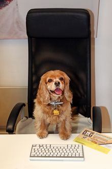 <b>Bring Your Dog to Work Day</b><br>Selection of 16 items