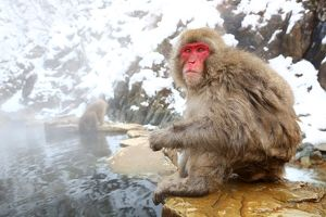 <b>Snow Monkeys</b><br>Selection of 34 items