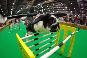 <b>London Pet Show 2015</b><br>Selection of 36 items
