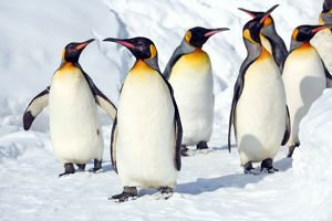 <b>Penguin Walk, Japan</b><br>Selection of 15 items